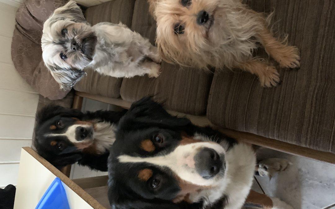 Hunde Foto: Marianne und Bernersennen – Meine Bande