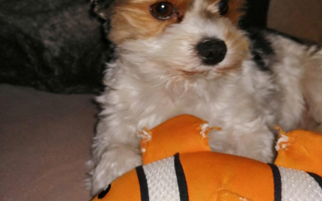 Hunde Foto: Tanja und Buddy – Mein bester Freund 😘