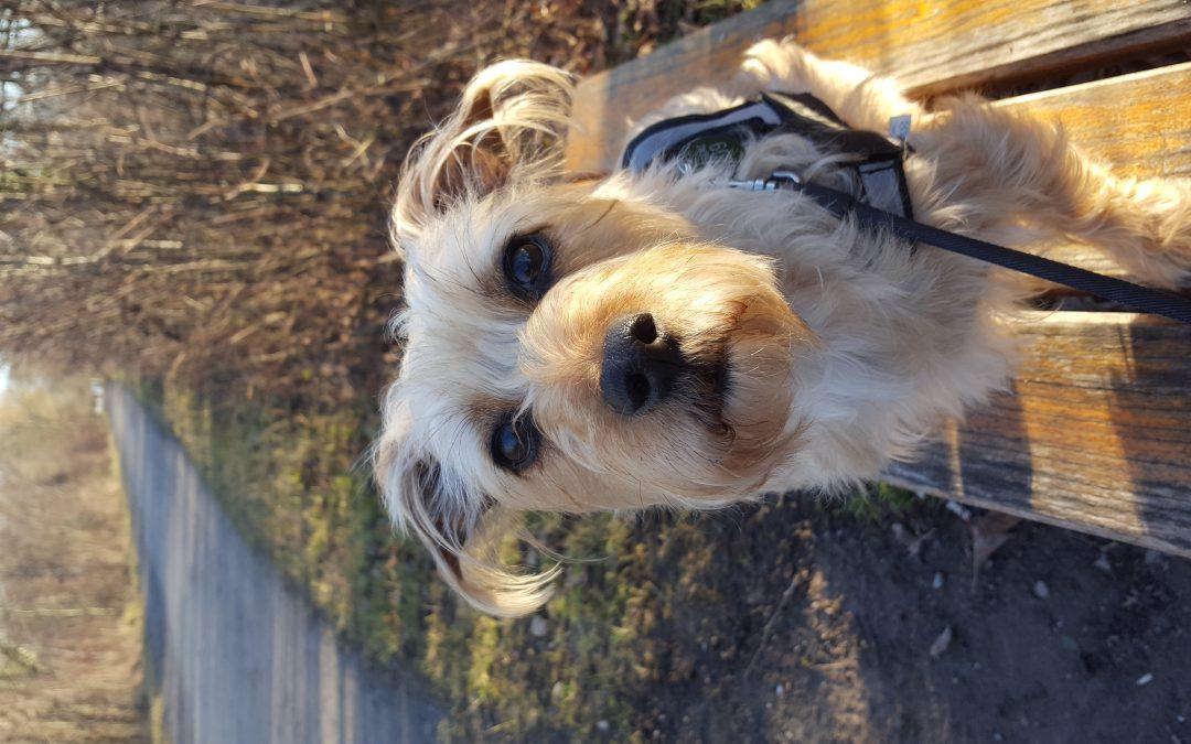Hunde Foto: Sabine und Bella – Meine knutsch Kugel
