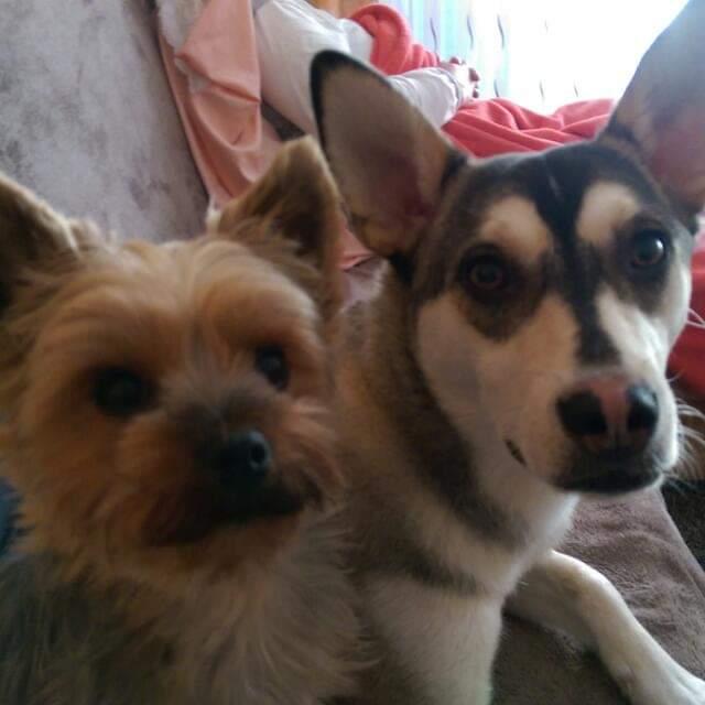 Hunde Foto: Elisabeth und Terra und Nelly – Meine Mädels