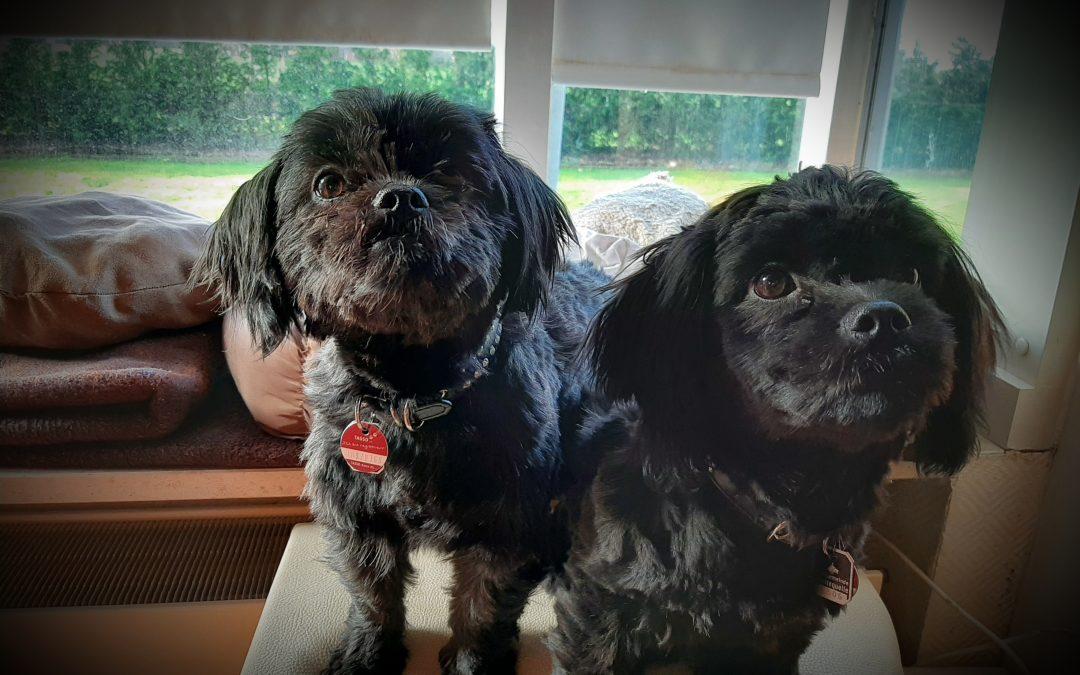 Hunde Foto: Elke und Luna und Nala – Meine beiden Lieblinge