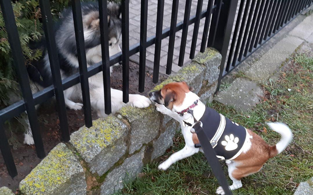 Hunde Foto: Steffi und Kessy – Guten Morgen,  ich bin Kessy (an der Leine). Und wer bist du?