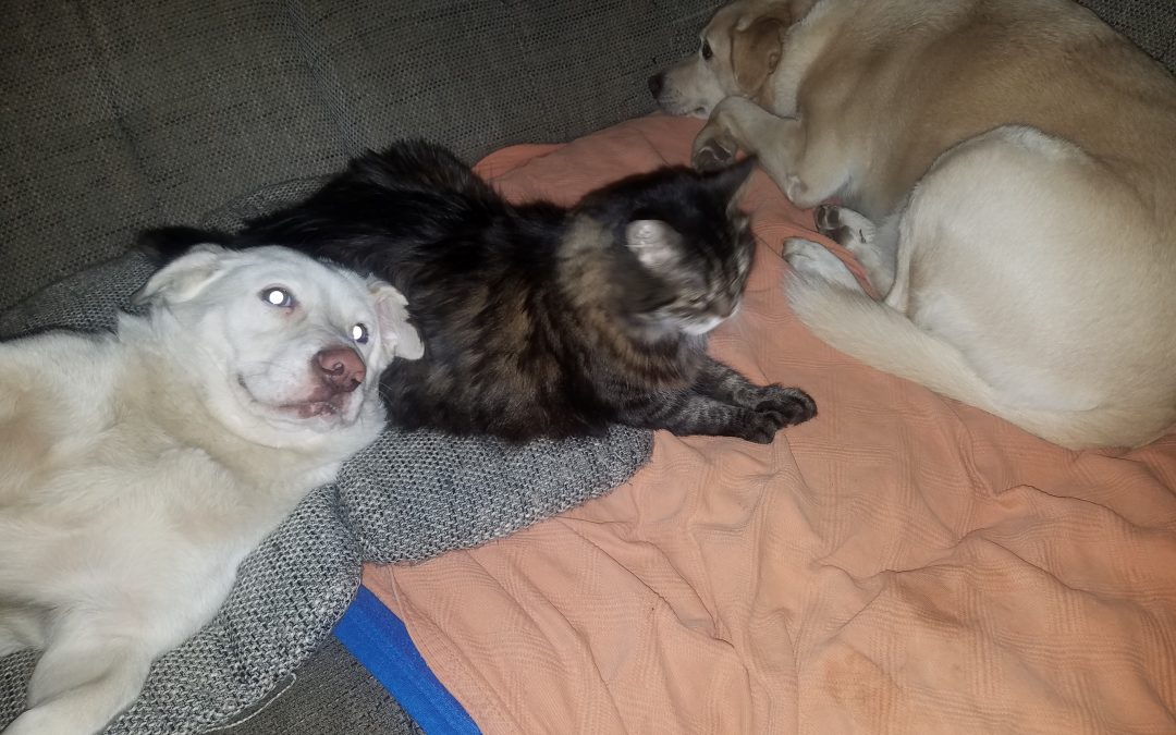 Hunde Foto: Annette und Leone, Gina u. Luna – Rudelchillen