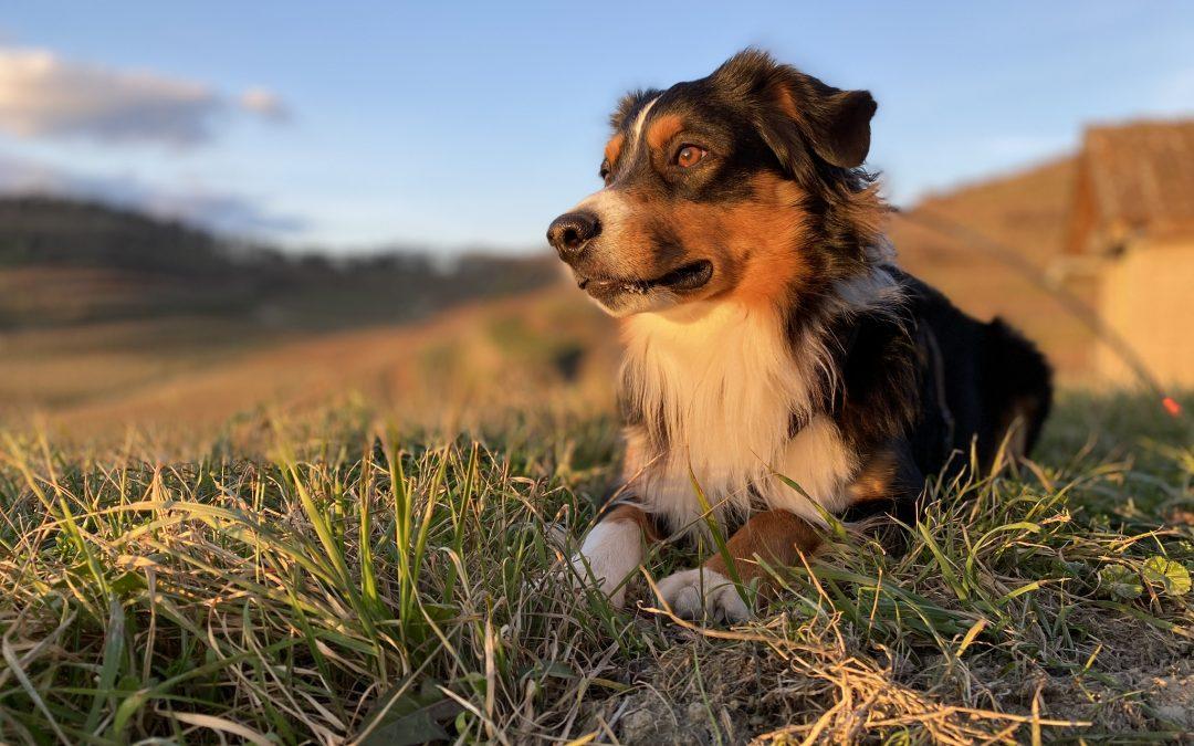 Hunde Foto: Daniela und Sky – Hübscher Sonnenschein