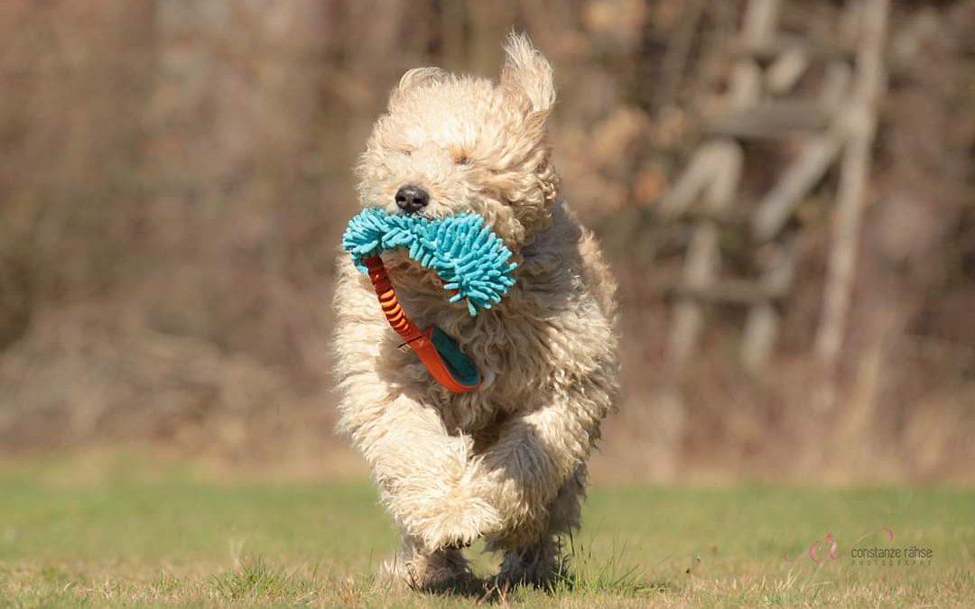 Hunde Foto: Kerstin und Teddy – Flughund