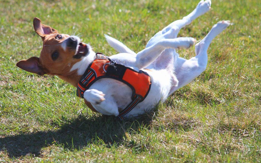 Hunde Foto: Catherine und Zlati – Verspielt