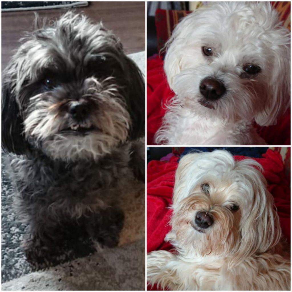 Meine 3 süßen hunde