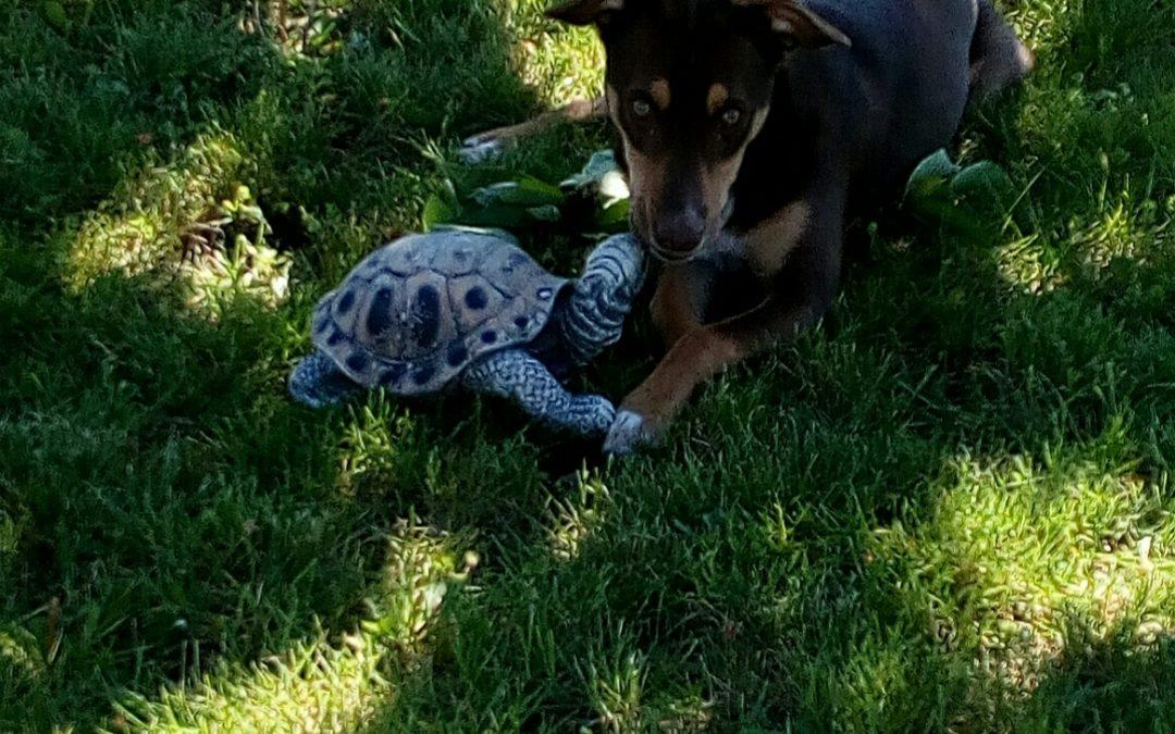 Hunde Foto: Corinna und Nala – Nala und Schildi