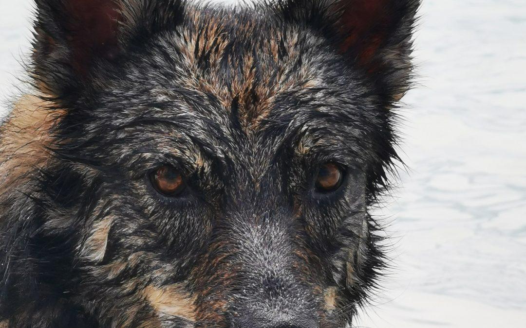 Hunde Foto: Gabi und Amy – Einfach nur wow