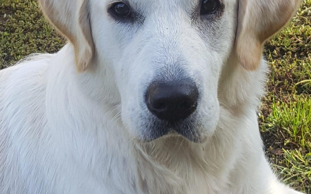 Hunde Foto: Simone und Amy – AMY, die weiße Lady.