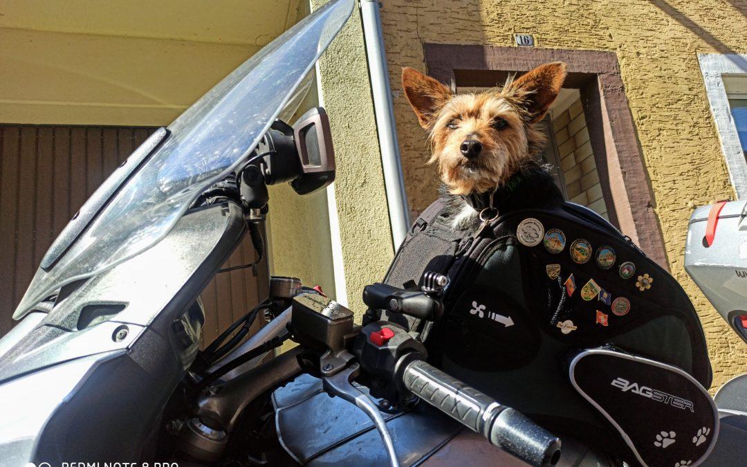 Hunde Foto: Tom und Willi – Der Rocker